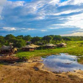 Somalisa Acacia