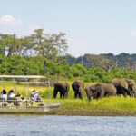 Chobe River Sunset Cruise Elephants