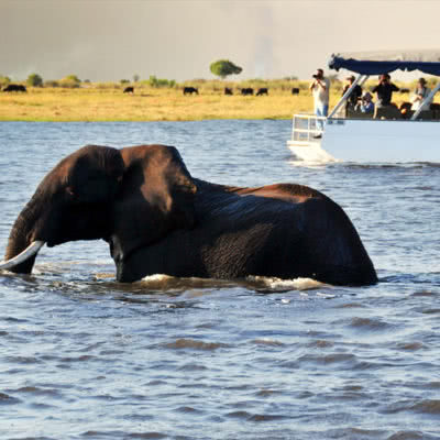 Chobe Day Trip Cruise