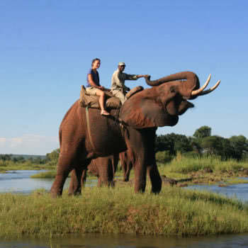 Elephant Ride Livingstone