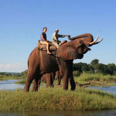 Elephant Ride Livingstone