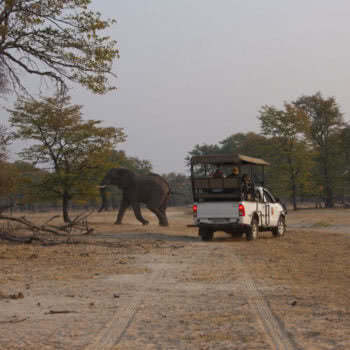 Livingstone Game Drive