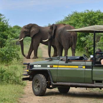 Victoria Falls Game Drive