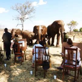 Art Safari Victoria Falls