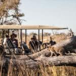 Pom Pom Camp Okavango Delta Game Drive