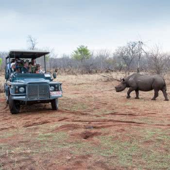 Rhino Search Safari Victoria Falls