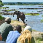 Walking Safaris Elephant