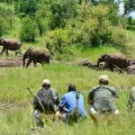 Walking Safaris Herd