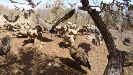 Vulture Culture Experience