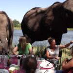Picnic Lunch With Elephants