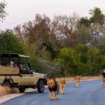Rhino Post Safari Lodge Lions