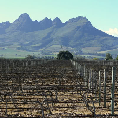 Best Of The Cape Winelands