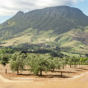 Exclusive Stellenbosch Wine Tour Mountain View