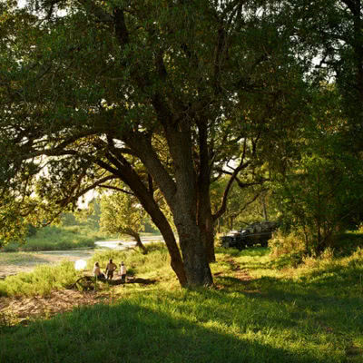 Ebony Lodge Tree