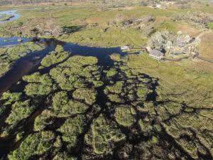 Swamps and waterways in the Okavango Delta