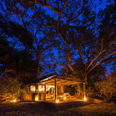 Busanga Bush Camp Tree