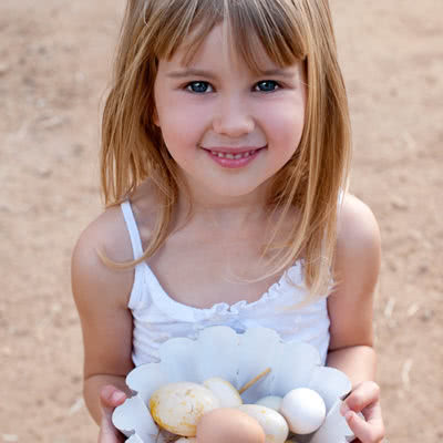 Family Fun & Furry Friends Eggs