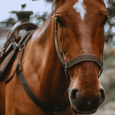 Horse Riding & Wine
