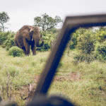 Pot And Spot Game Drive