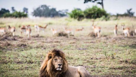 Mombo Camp Wildlife