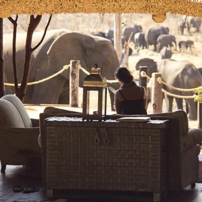 khulu bush Lounge Elephant